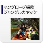 紅樹林探險叢林皮划艇